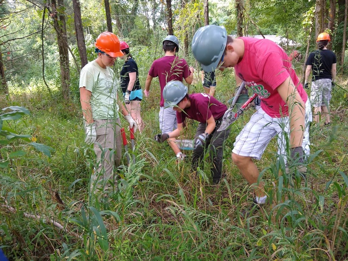 students removing an invasive species